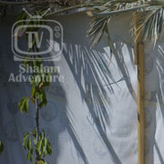 decorating sukkah
